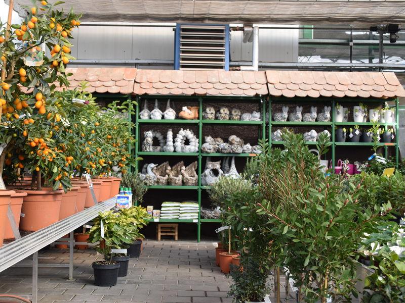 zahradnické cetrum Brabec Brno