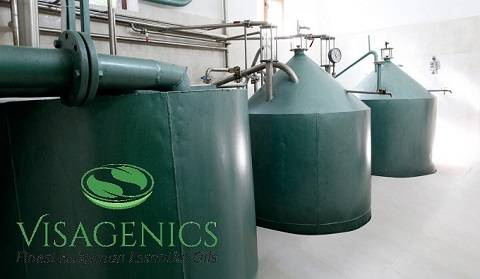 Visagenics Steam Distillation and Filtration Process
