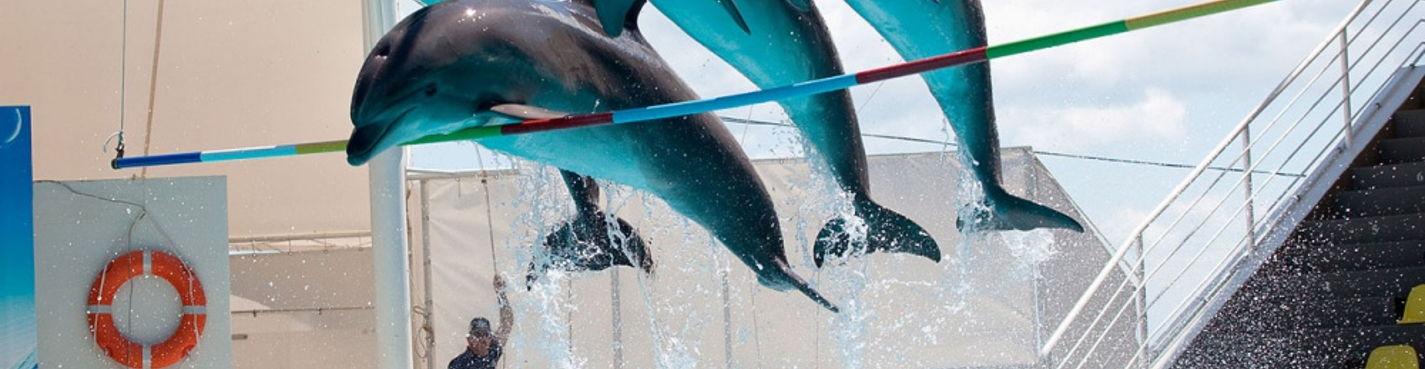 Морская прогулка в Дельфинарий в Коктебеле