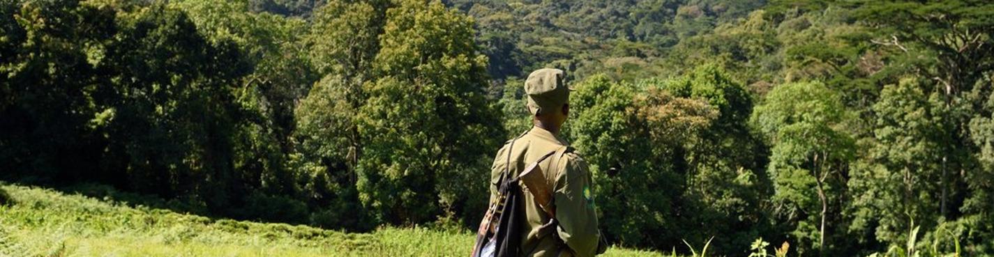 В гости к горным гориллам из Уганды