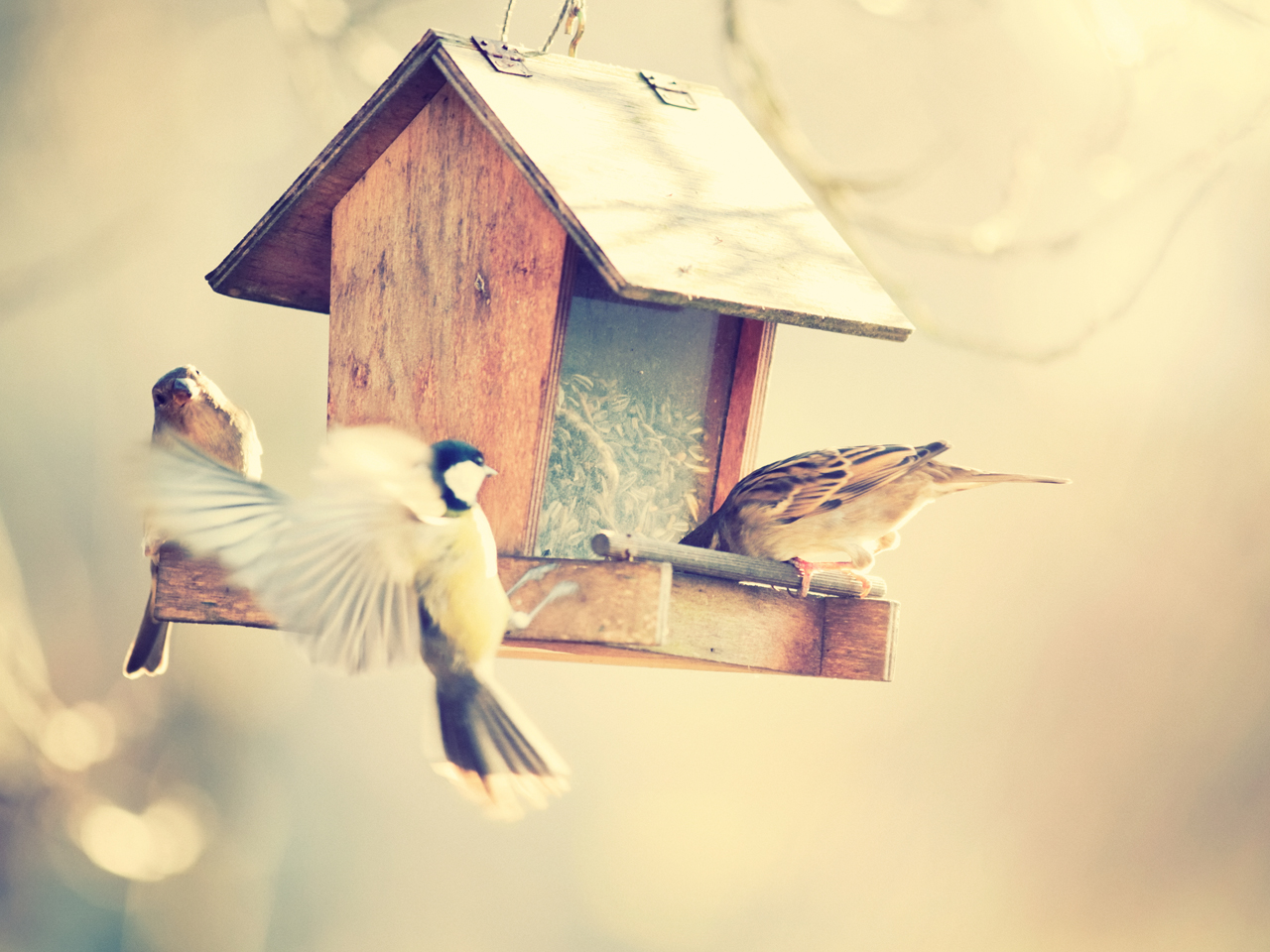How bird nesting boxes can transform life at home