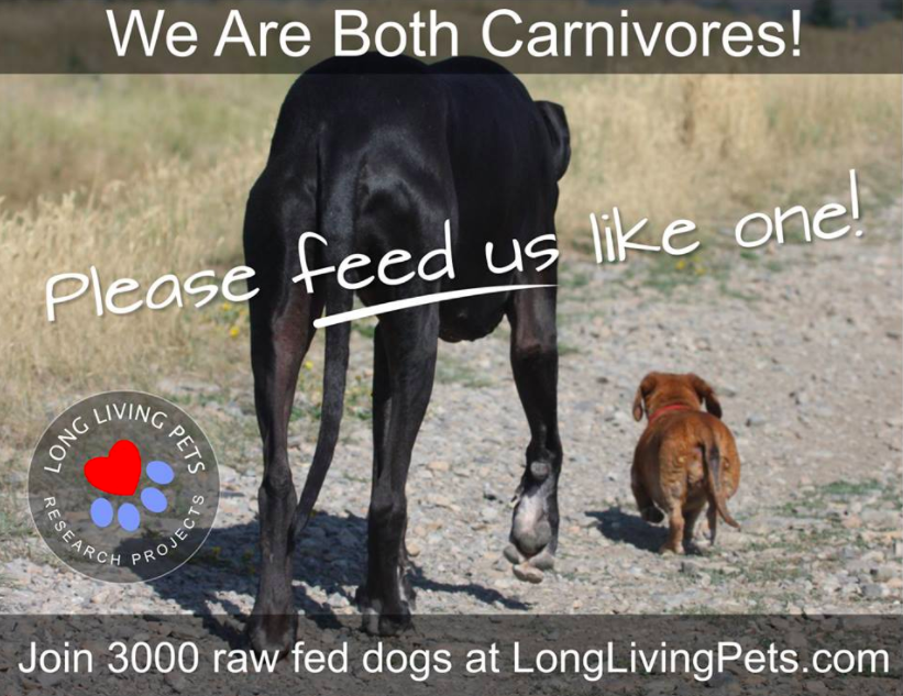Long Living Pets/Dogs Study Practicing Raw Food Diet