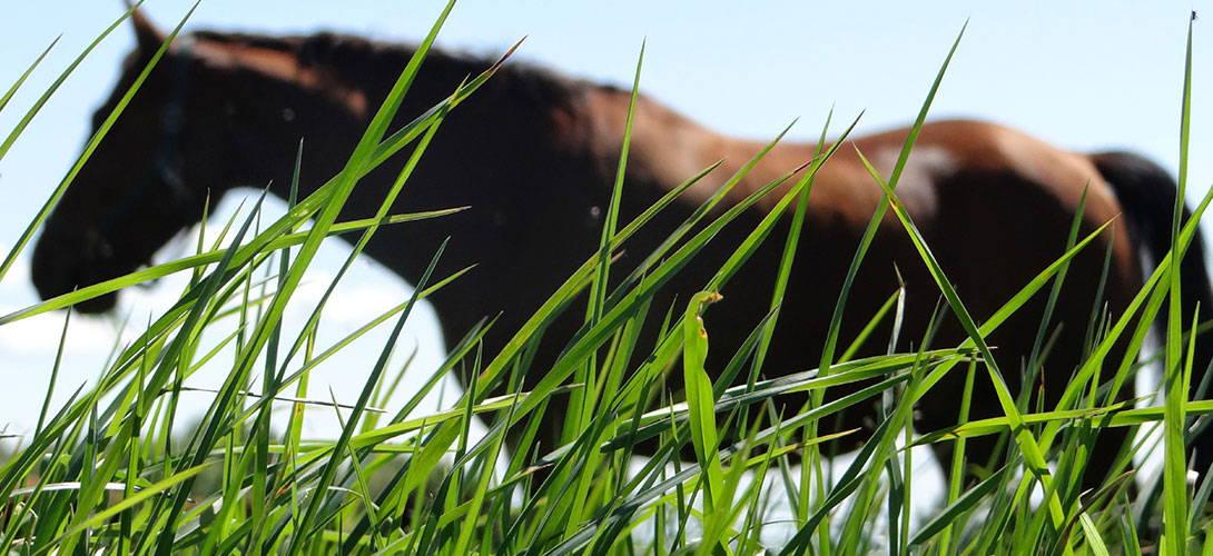 Entwurmung und Wurmkuren beim Pferd