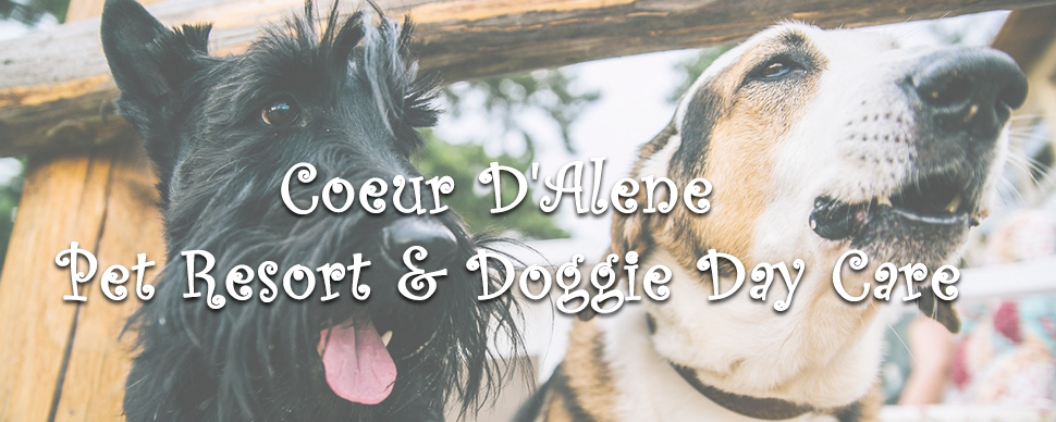 Coeur D'Alene Pet Resort & Doggie Day Care