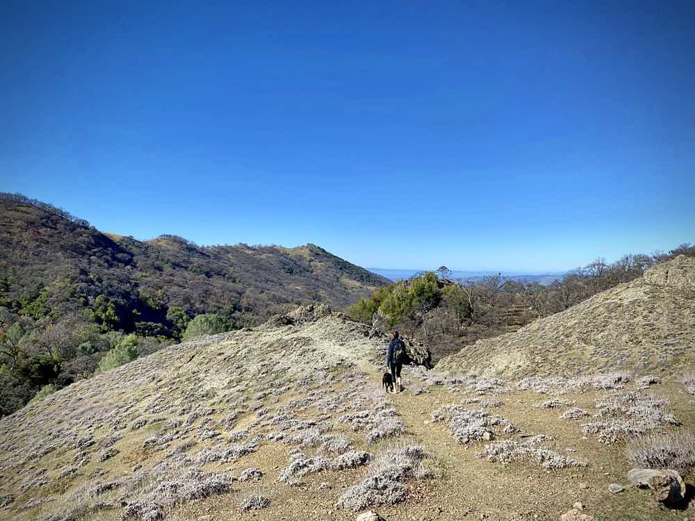 Woman hiking with her dog in the Ohlone Wilderness in the East Bay