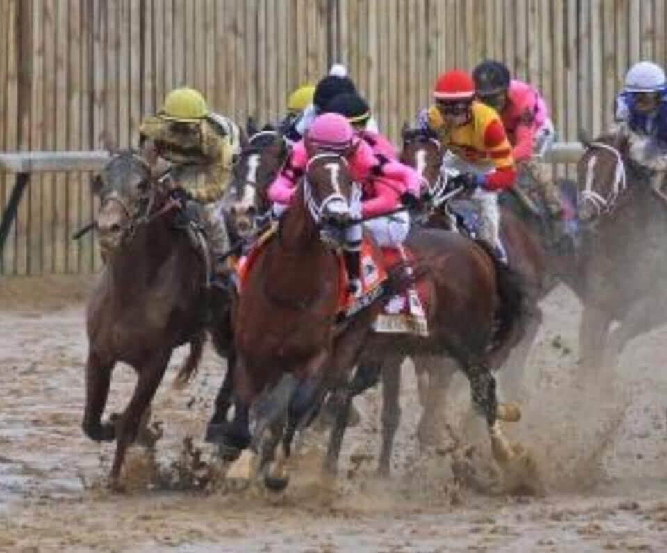 Preakness Stakes Odds