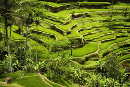 Half Day Tour to Amazing Ubud