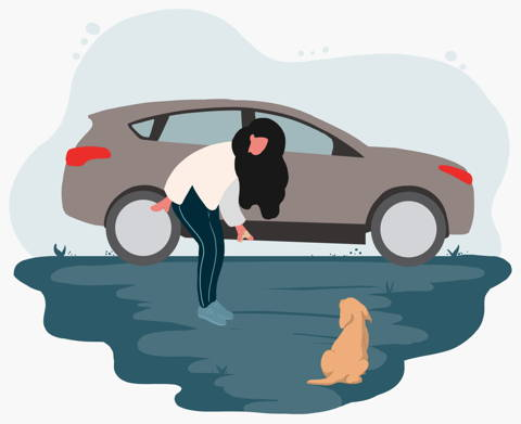 Desensitisation training can help your dog stay calm in the car