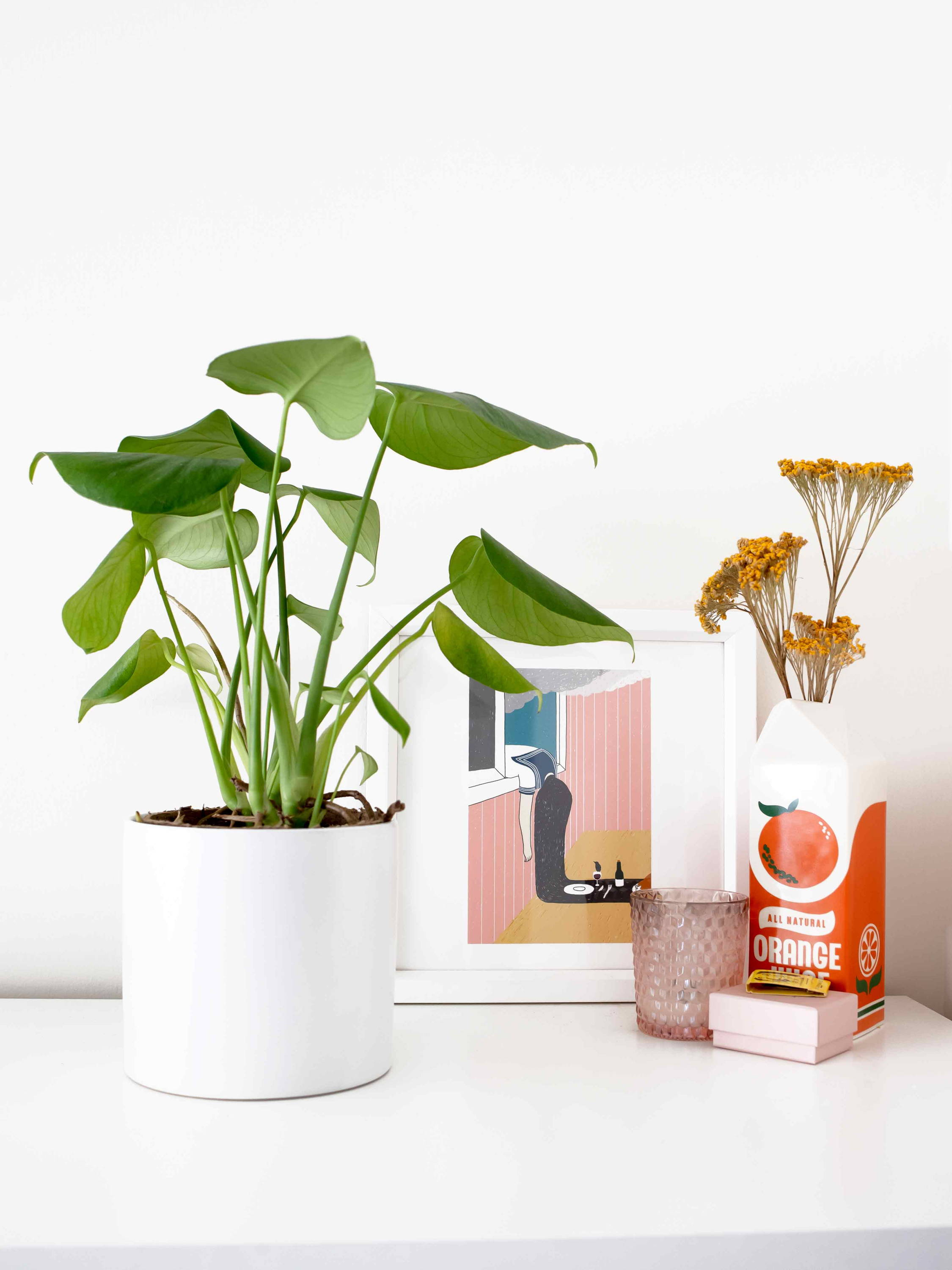 Potted monstera on a table