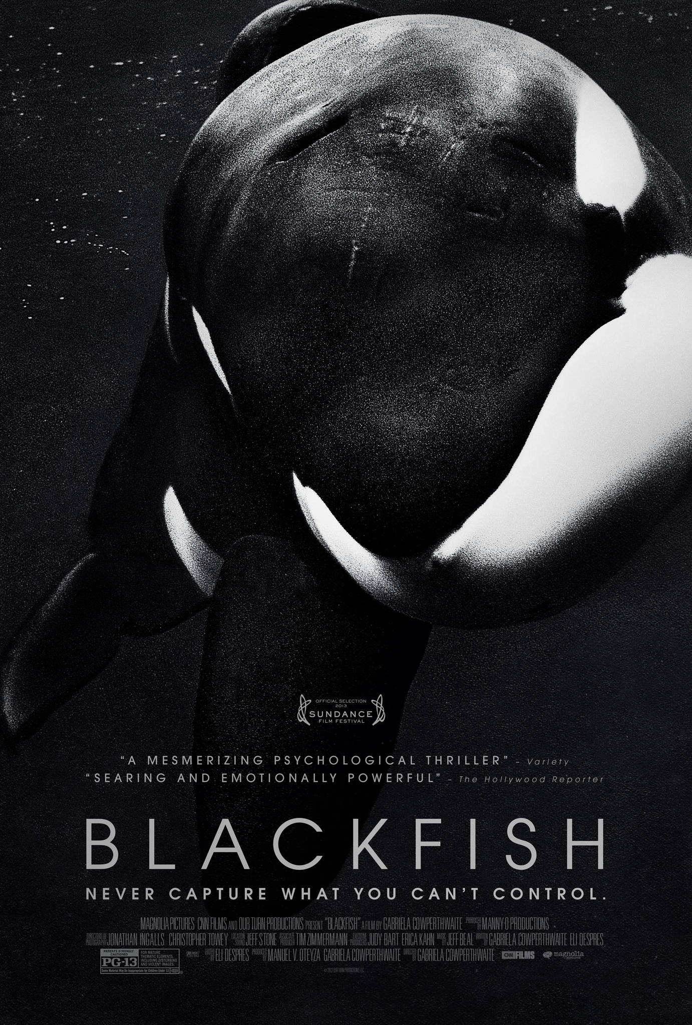 Poster pf 'Blackfish', story of a whale who killed people while in captivity.