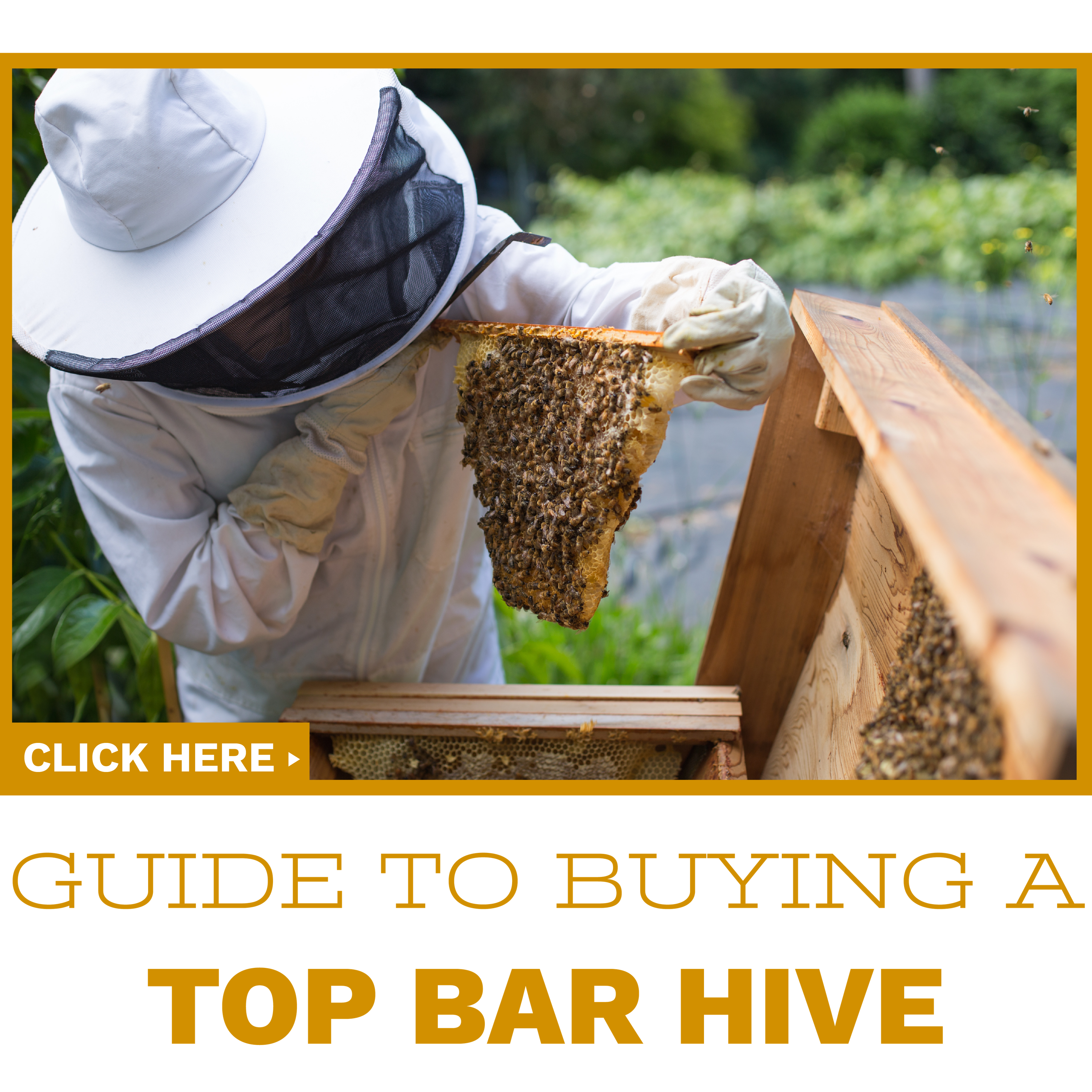 Click to read our guide to buying your first top bar hive