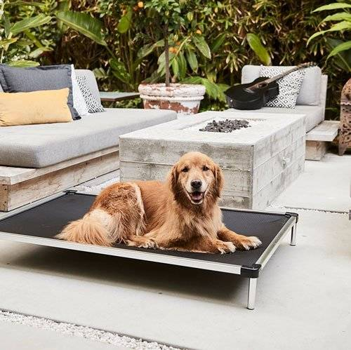 a golden retriever lying on a chew proof cot bed outside