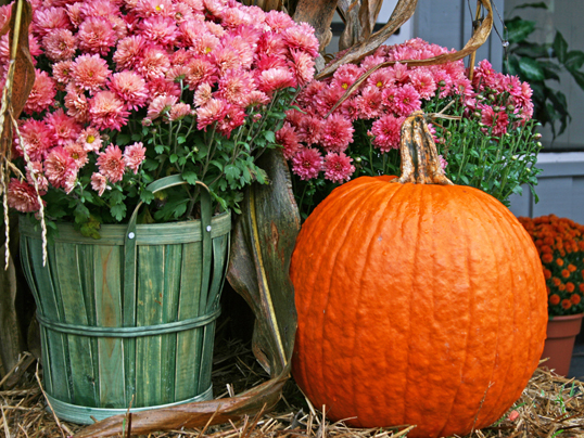 Blanes - A beautiful fall garden is possible with a little bit of pre-planning: here's how.