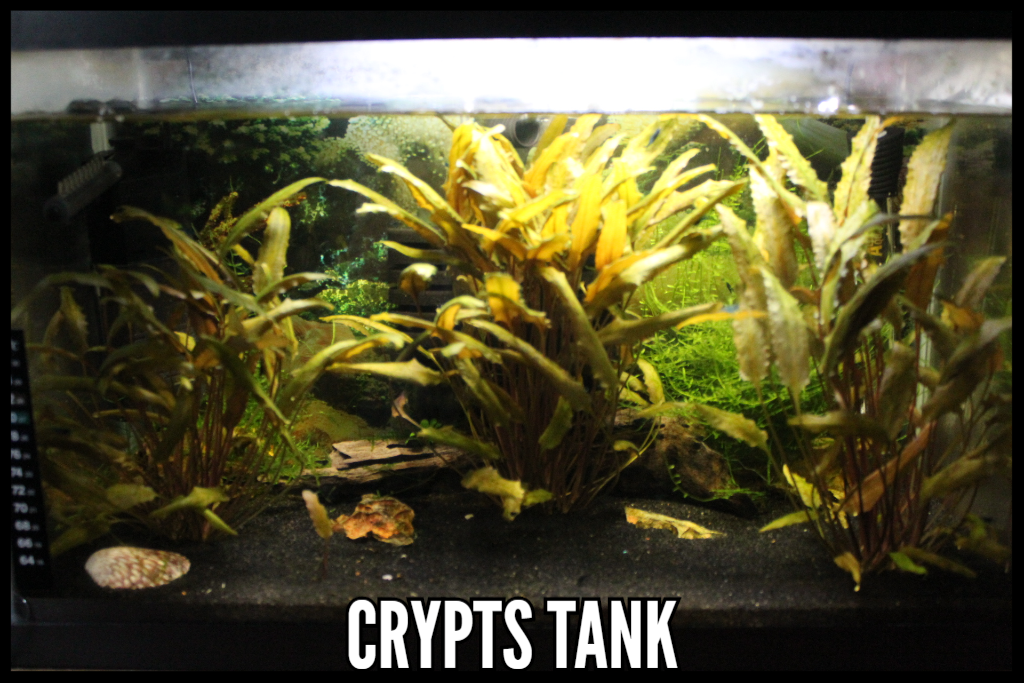 Crypt Plants