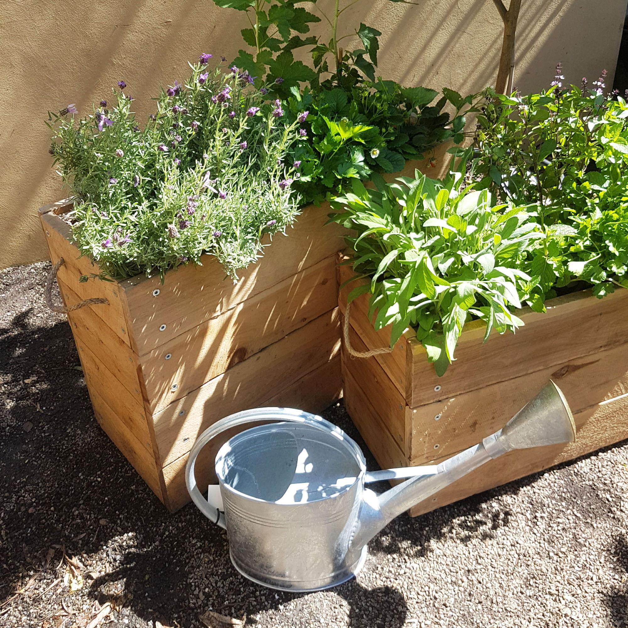 Growing Herbs and Veggies – Fitzroy Nursery