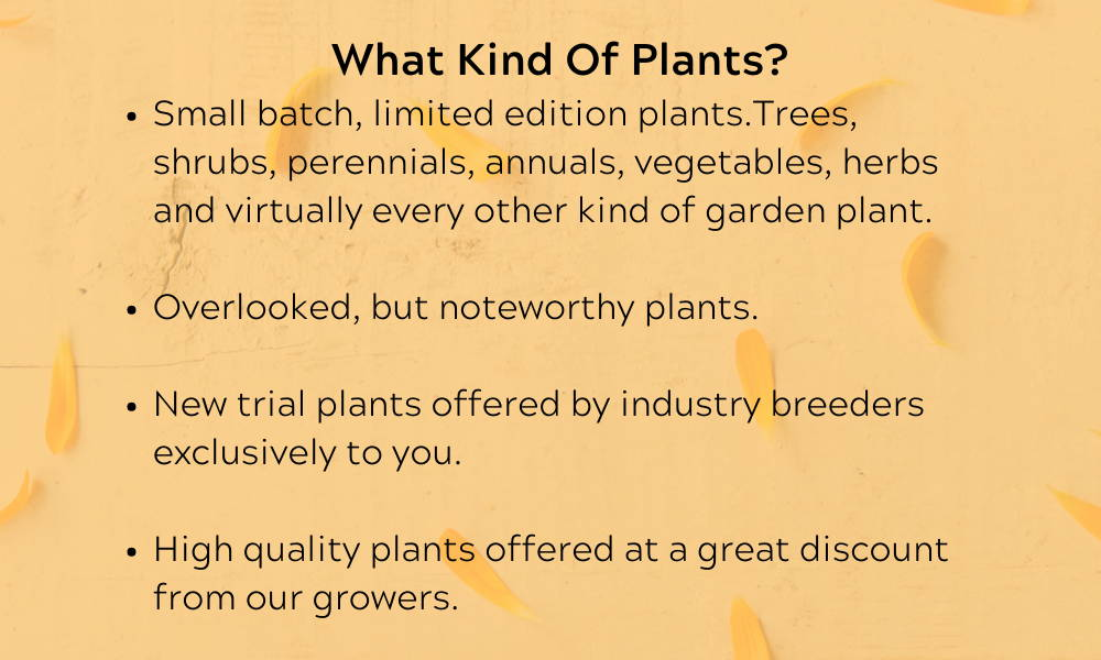 The quality and size of the plants is truly unprecedented. Having the plants hand delivered  and not put in a box makes all the difference in the world