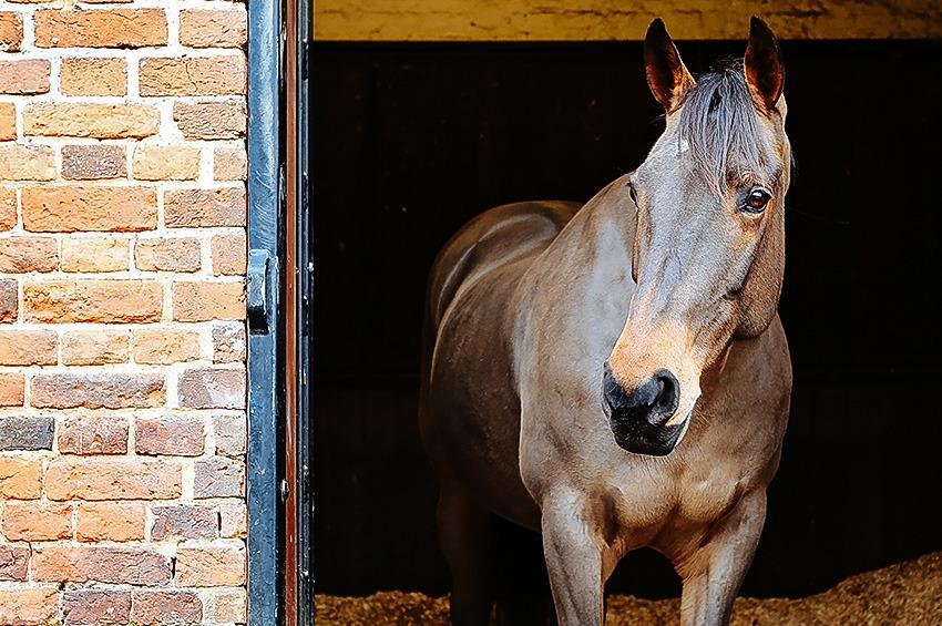 Horse benefits
