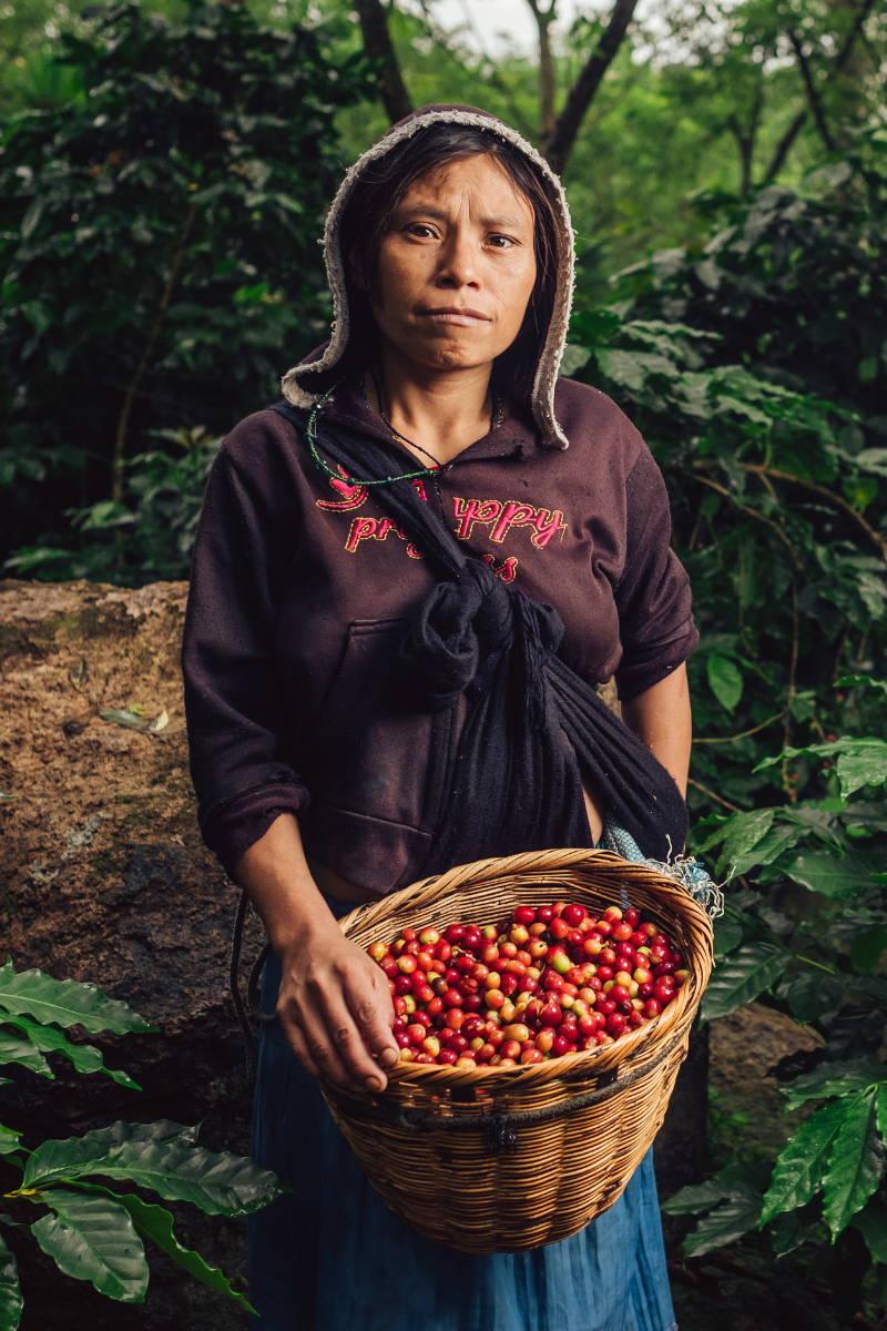 Woman Coffee Picker.