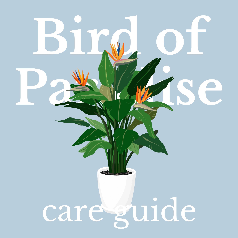 Drawing of bird of paradise