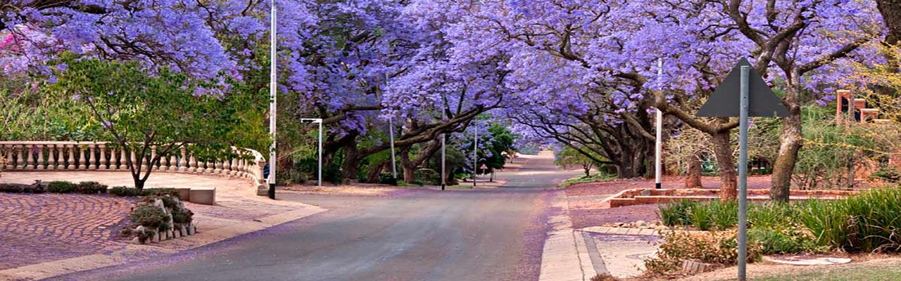 Real estate in 81 - 5.Jacarandas.jpg
