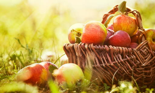 Proteol APL An active ingredient obtained from apples. It has perfect washing effects