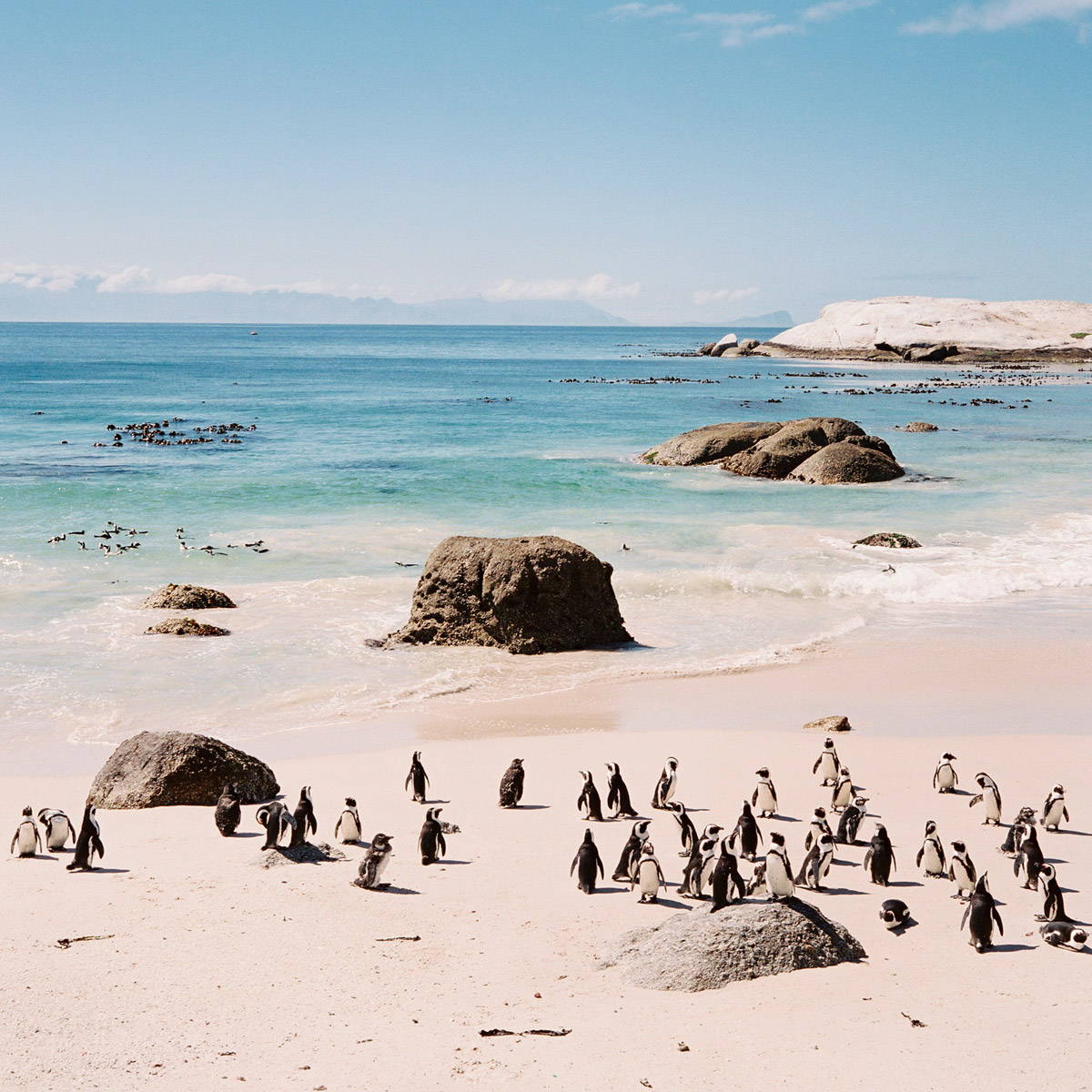 Beach shore with penguins. Seth Mourra/Stocksy