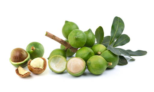 Macadamia Oil A cold-pressed oil from nuts of the ever-green macadamia tree