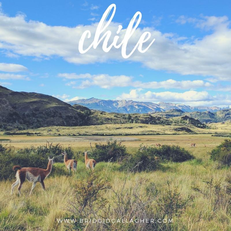 Photo of guanacos grazing in Patagonia // www.bridgidgallagher.com