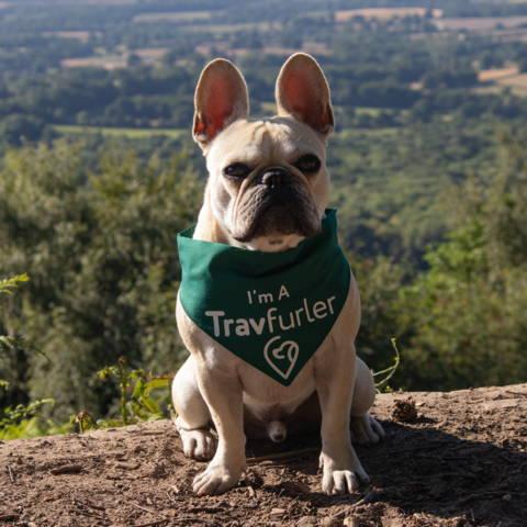 Francis the Travfurler | Green dog bandana