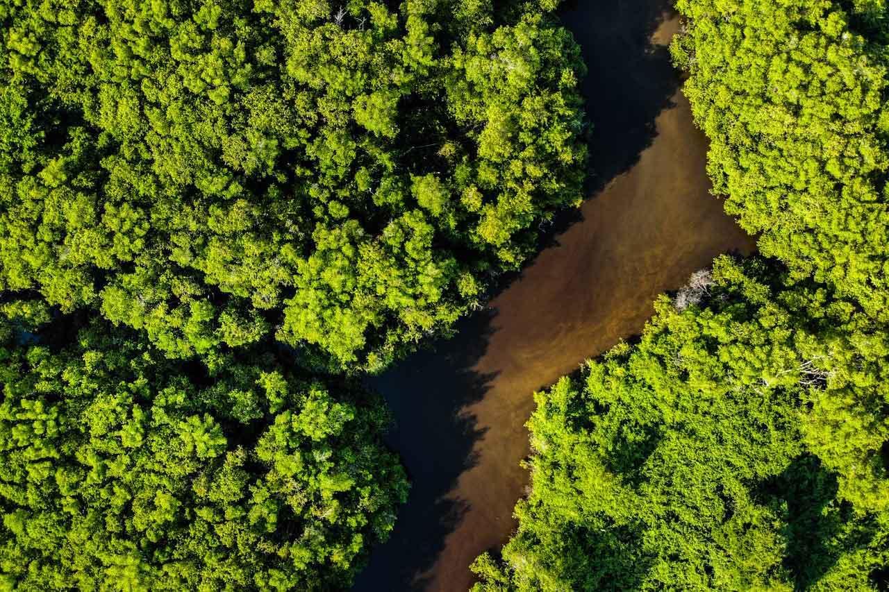 BeanBear Brazil forest