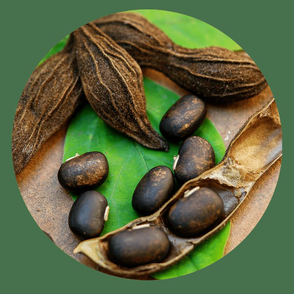 mucuna pruriens uses | Dendera Naturally