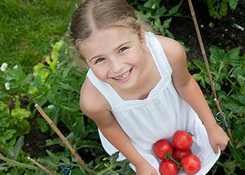 Seeds for the home gardener