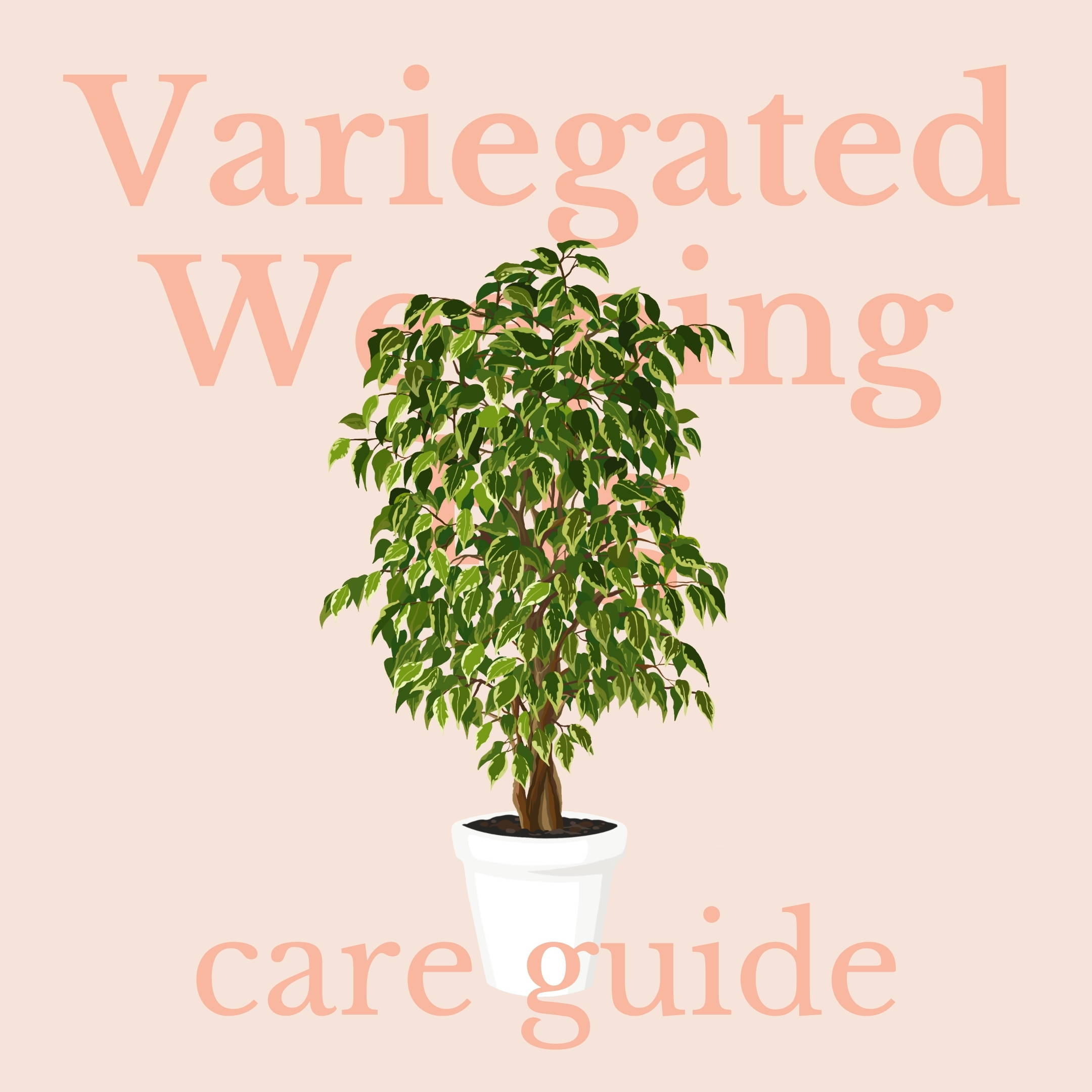 Drawing of variegated weeping fig
