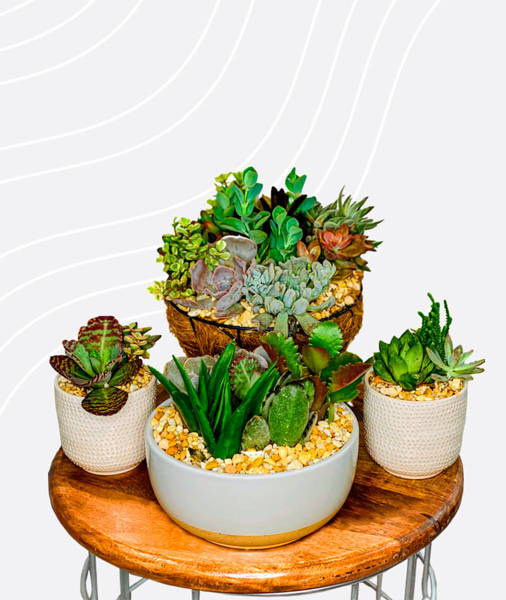 Succulent Of The Month Club PlantBox