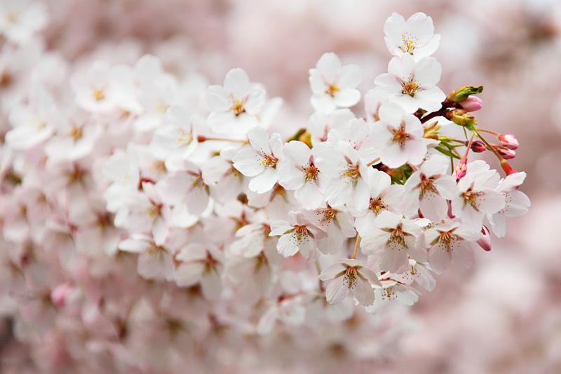bloom-2525.jpg