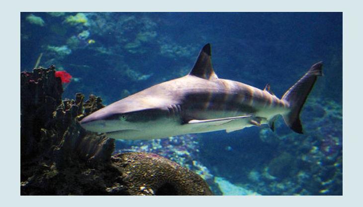 zoologischer garten berlin hai