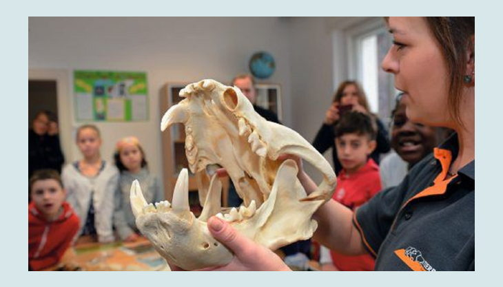 tierpark berlin friedrichsfelde kinder und tierknochen