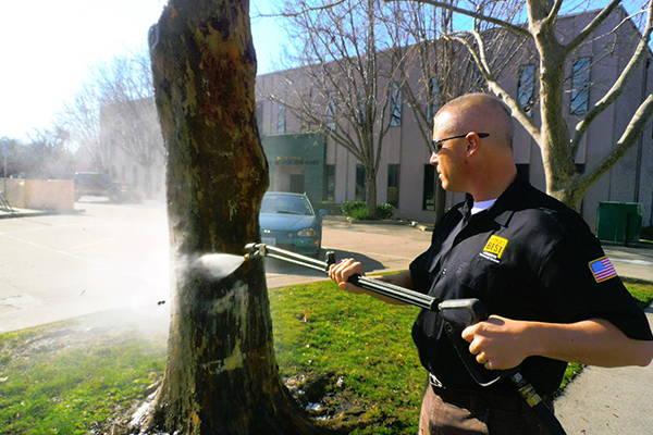 washing graffiti off of a tree using bare brick stone and masonry graffiti remover