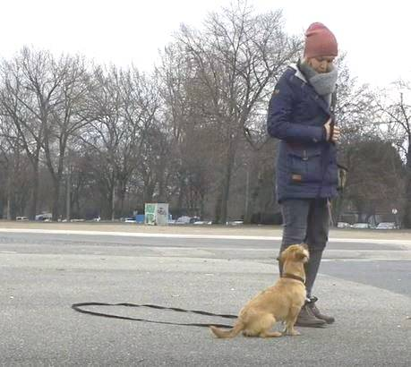 Training mit Hund und Schleppleine