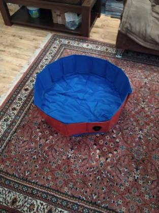 Swimming pool-dog-foldable-animals-company-bathtub-indoor-dog-cats-children-dogpool-testimonial-2