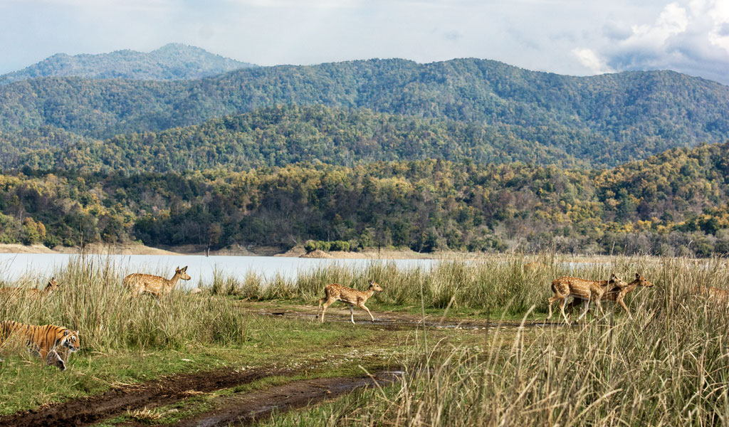 jim-corbett-national-park.jpg