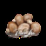 <p>Funghi</p>