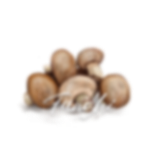 <p>Mushrooms: An Illustrated Guide</p>