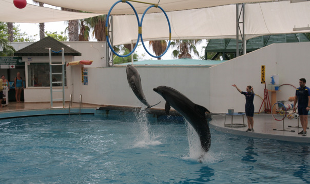 Шоу дельфинов и морских котиков в Анталии