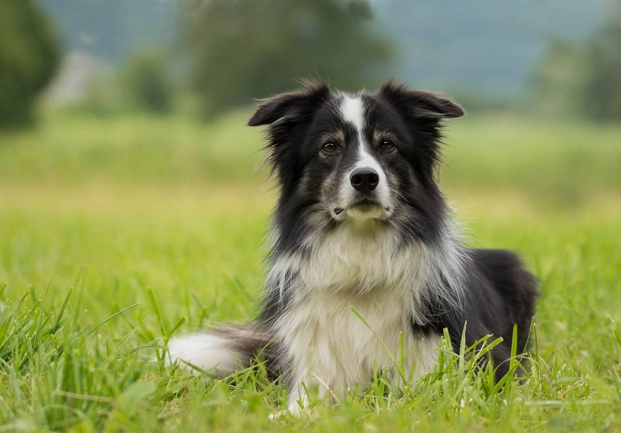Nierenkrebs beim Hund