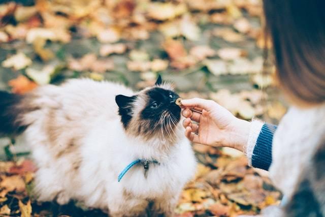 Outdoor Cat,  alternatives to cat fence, cat habits, cat training, fluffy cat