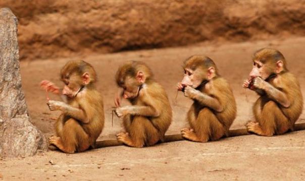 Единственный в России обезьяний питомник