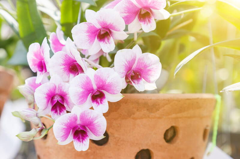 15 Frequently Asked Questions About Orchid Repotting Repotme