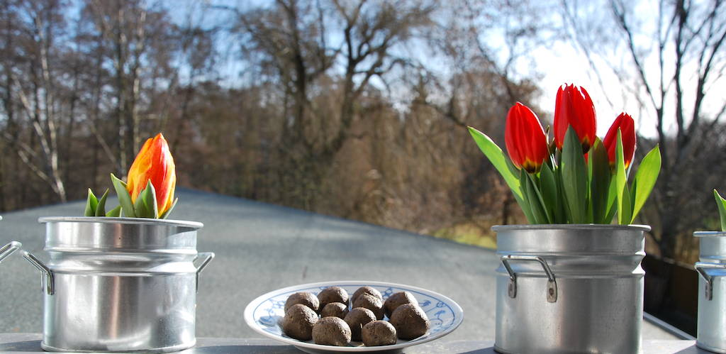 Blick durch das Fenster in den Garten. Auf der Fensterbank stehen Seedballs zum trocknen zwischen zwei Tulpentöpfen