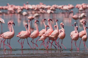 Lake Magadi - perfect for bird lovers